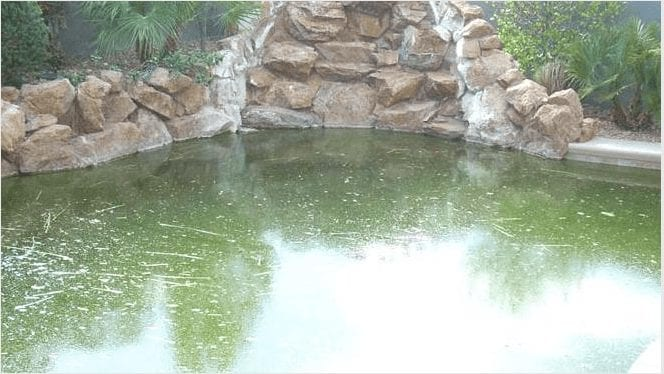 Clearing Green Pools….. How To Do It!