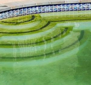 Mustard Algae Removal Las Vegas